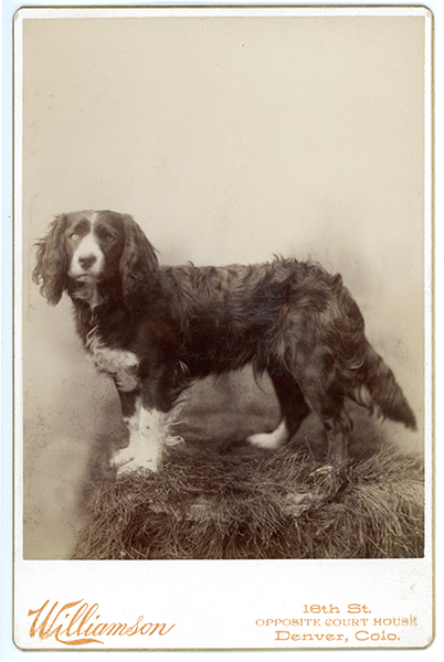 Cabinet Card Portrait of a Dog